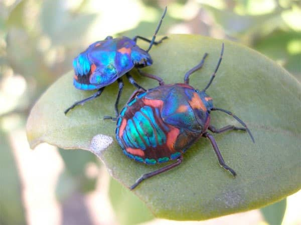 صور الحشرات