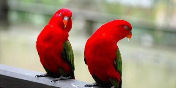 طيور الحدائق