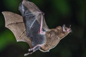 معلومات عن الخفافيش