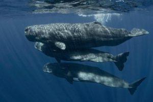 معلومات عن الحيتان