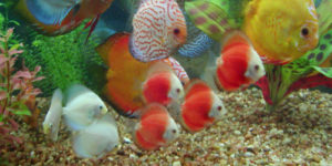 أسماك المياه العذبة