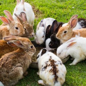 معلومات مفيدة عن الأرانب البرية