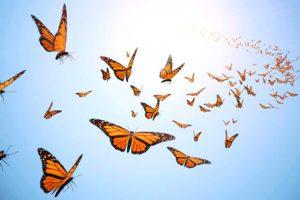 معلومات عن الفراشات والعث