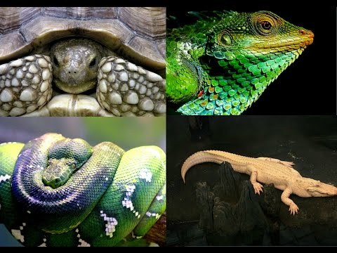 أنواع الزواحف
