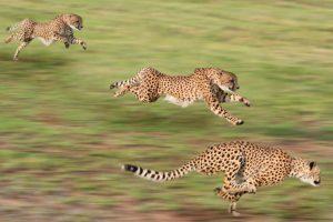 الحركة عند الحيوانات