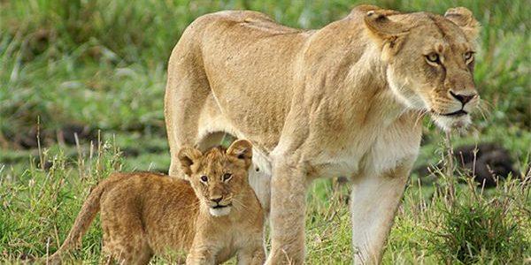 الحيوانات وصغارها