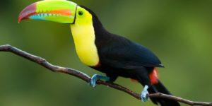 أنواع الطيور وأسماؤها