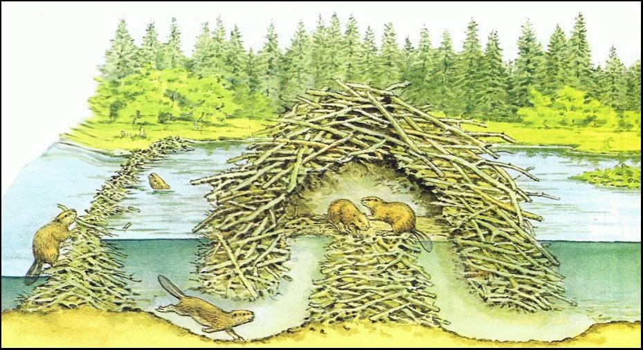 بيوت الحيوانات