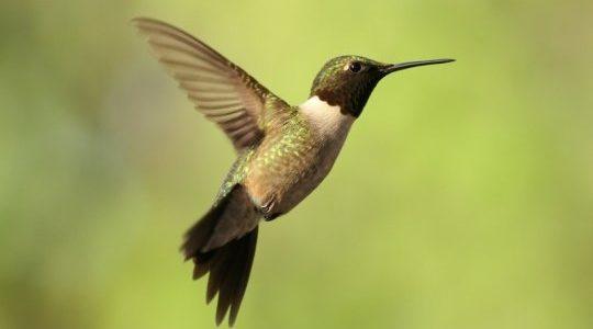 بحث عن خصائص الطيور