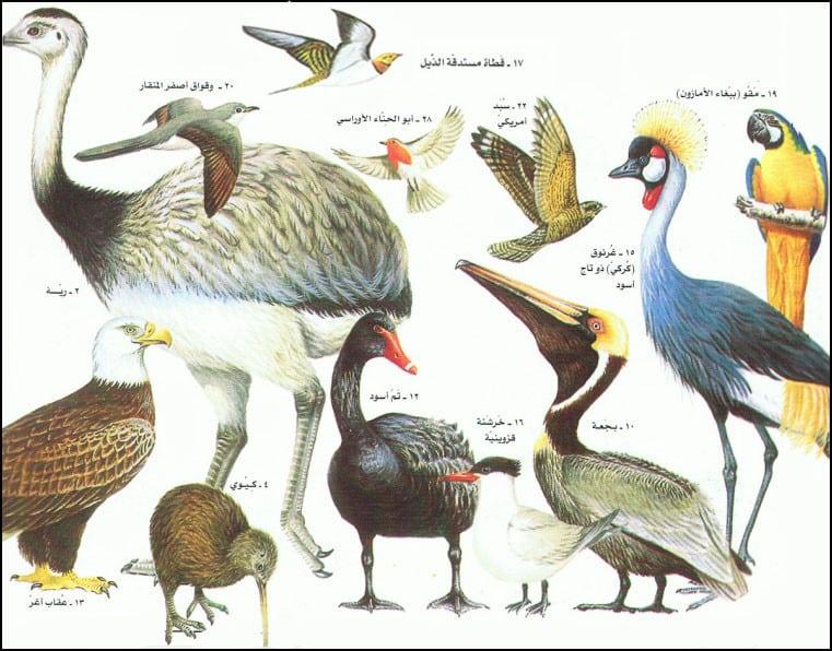 أنواع الطيور وأسماؤها طرق العيش الغذاء بيئتها التربية المنزلية و التكاثر أكبر موضوع شامل