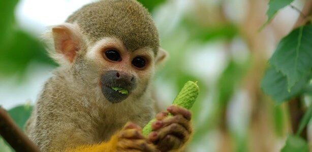 عجائب عالم الحيوان
