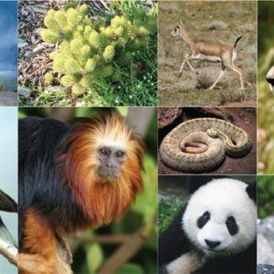 مملكة الحيوان