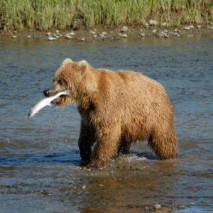 ماذا يأكل الدب