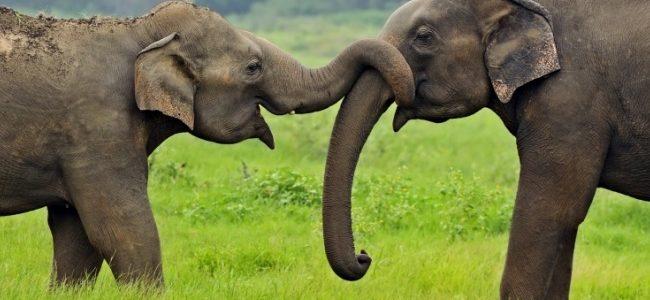 التزاوج عند الحيوانات