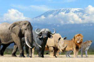الحيوانات اللبونة