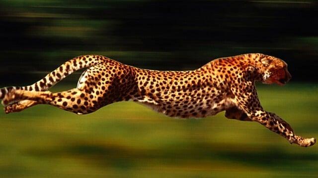 أسرع الحيوانات في الجري