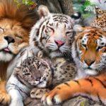 اسماء الحيوانات