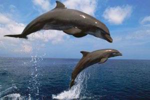 هل الدلفين مهدد بالإنقراض