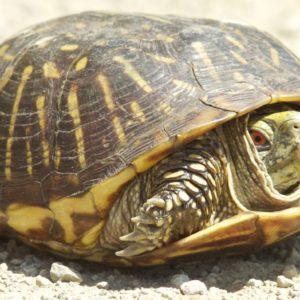 معلومات عن أنواع السلاحف