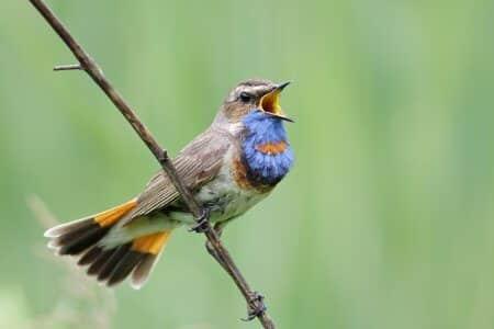 تغريدة الطيور