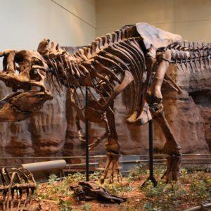 10 أشهر حفريات ديناصورات