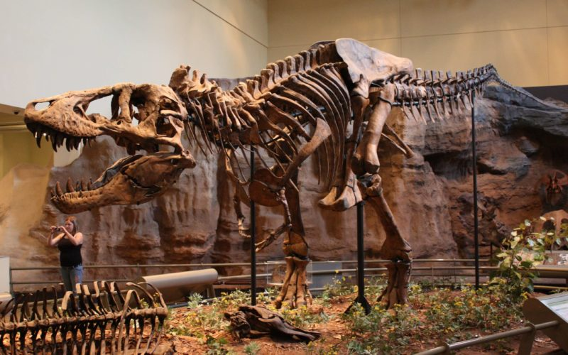 حفريات ديناصورات