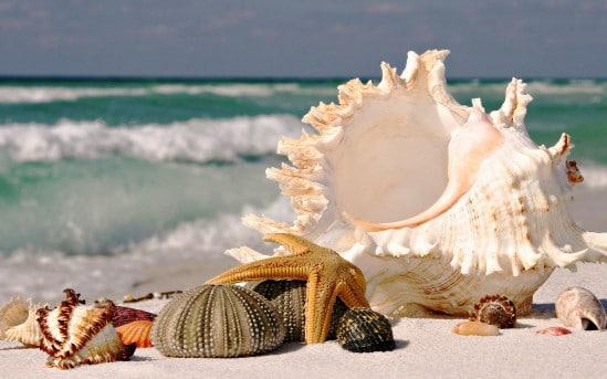 صدف البحر