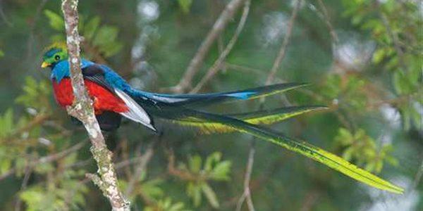 طيور الغابات