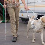 كيف يتم تدريب الكلاب التي تقود العميان