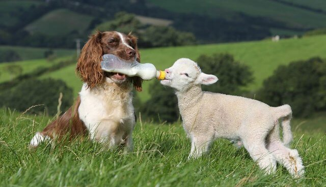 لغة اتصال الحيوانات