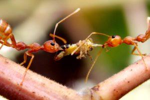 ماذا يأكل النمل