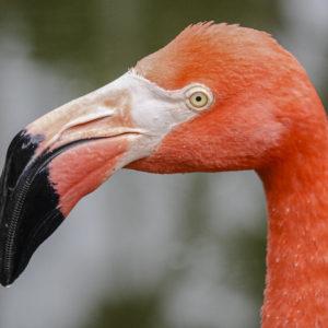 منقار الطيور