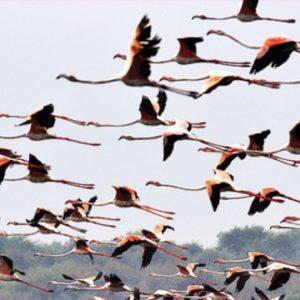 أسباب هجرة الطيور