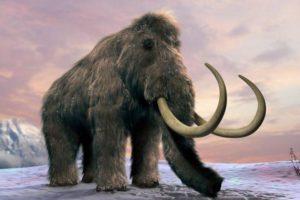 تاريخ الثدييات