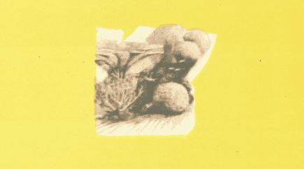 المرجان البحري
