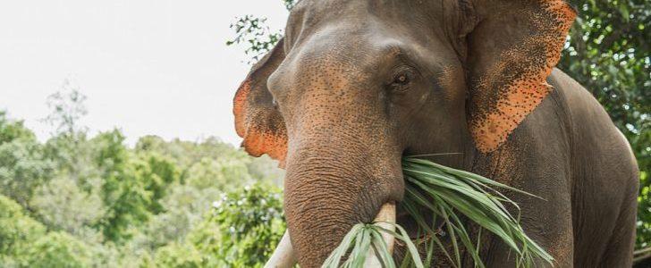 حيوانات اكلة الاعشاب
