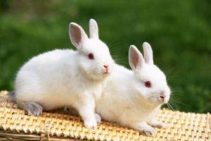 معلومات عن أنواع وأسماء الثدييات