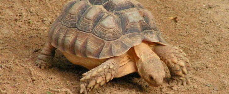 معلومات عن السلاحف البرية