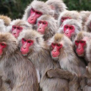 معلومات عن القرود