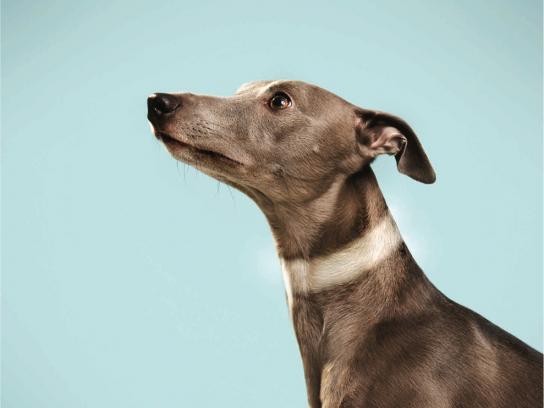 الكلب الصياد البصري