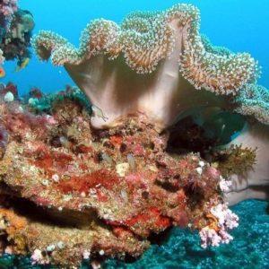 ماهو المرجان البحري