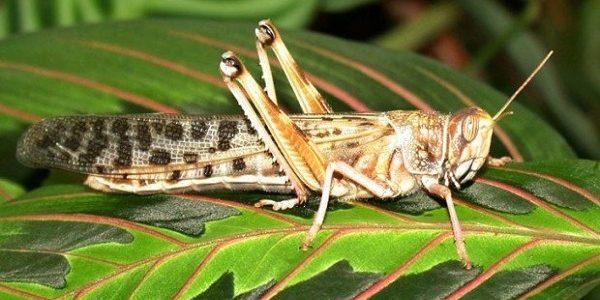 بحث عن الحشرات  %D8%A8%D8%AD%D8%AB-%D8%B9%D9%86-%D8%A7%D9%84%D8%AD%D8%B4%D8%B1%D8%A7-600x300