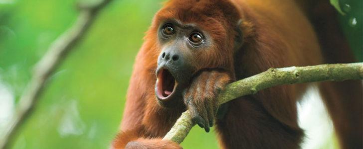 جميع أنواع القرود بالصور