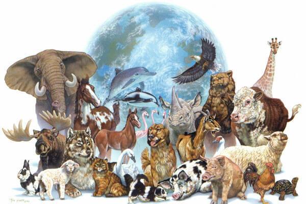 بحث عن تصنيف الحيوانات