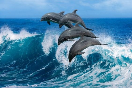 حيوان الدلفين في المياه