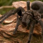 عنكبوت