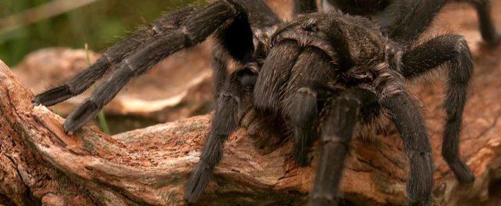 معلومات عن العناكب وأنواعها