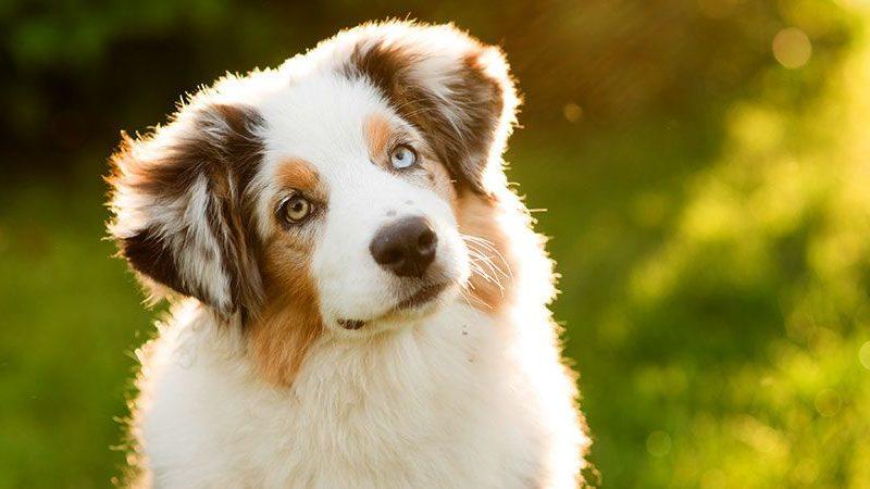 حقائق عن الكلاب