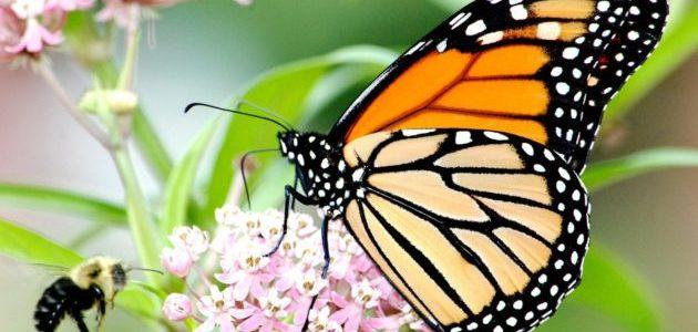 ماذا تأكل الفراشة