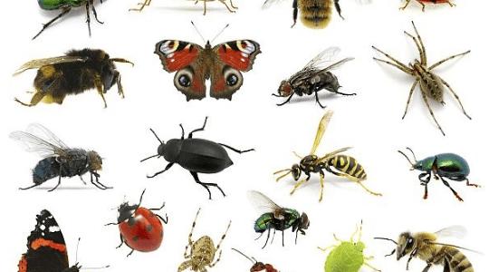 ما هي الحشرات
